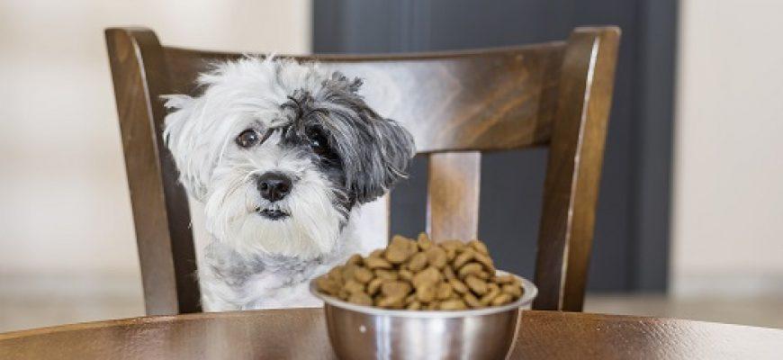 התאמת מזון לכלבים בעזרת רויאל קנין